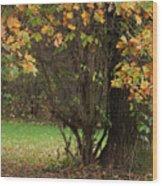 Autumn Tree 2 Wood Print