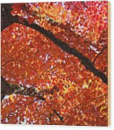 Autumn Tree Art Prints Orange Red Leaves Baslee Troutman Wood Print