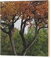 Autumn Tree II Wood Print