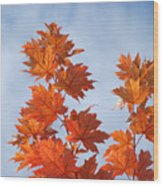 Autumn Tree Leaves Art Prints Blue Sky White Clouds Wood Print