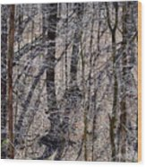 Autumn Trees 1 Wood Print