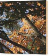 Autumn Trees 2015 Pa 01 Wood Print