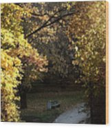 Autumn Trees 3 Wood Print