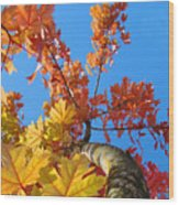 Autumn Trees Artwork Fall Leaves Blue Sky Baslee Troutman Wood Print