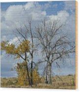 Autumn Trees II Wood Print