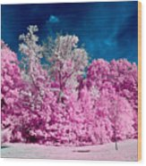 Autumn Trees In Infrared Wood Print