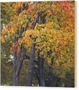Autumn Trees In Park Wood Print