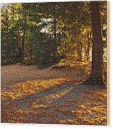 Autumn Trees Near Lake Wood Print