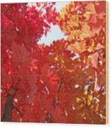 Autumn Trees Red Orange Fall Trees Art Baslee Troutman Wood Print