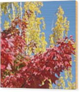 Autumn Trees Red Yellow Fall Tree Blue Sky Landsape Wood Print
