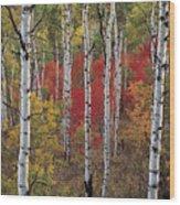 Autumn Warm Wood Print