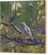 Autumn Waxwing 2 Wood Print