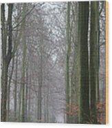 Autumn Woodland Avenue Wood Print
