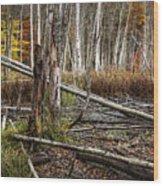 Autumn Woodland Marsh Scene Wood Print