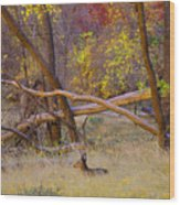 Autumn Yearling Wood Print