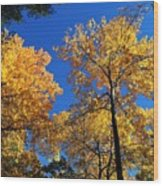 Autumn Yellow Foliage On Tall Trees Against A Blue Sky In Palermo Wood Print