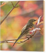 Autumn Yellow Rumped Warbler Wood Print