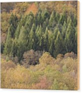Autumn2 Wood Print