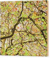 Autumnal Colours Wood Print