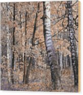 Autumnal Lightness Wood Print