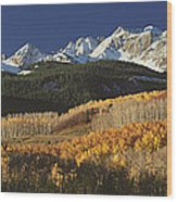Autumnal View Of Aspen Trees And The Wood Print