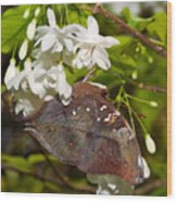 Autumnleaf Butterfly Wood Print