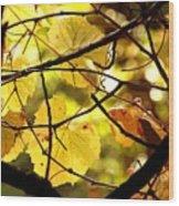 Autumn's Revelry Wood Print