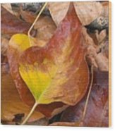 Autumns Color Palette Wood Print
