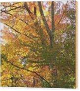 Autumn's Gold - Photograph Wood Print