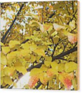Autumns Gold Wood Print