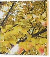 Autumns Gold Wood Print