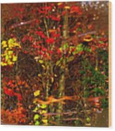 Autumns Looking Glass 2 Wood Print