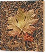 Autumn's Textured Maple Leaf Wood Print
