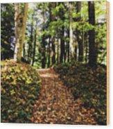 Autumn's Trail Wood Print