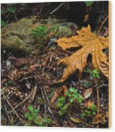 Autumn's Treasure Wood Print
