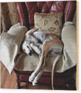 Ava - Asleep On Her Favourite Chair Wood Print
