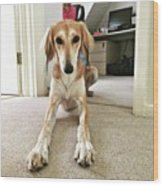 Ava On Her First Birthday #saluki Wood Print