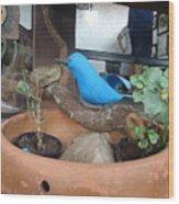 Ave Azul Em Cima De Uma Jarro De Barro Wood Print