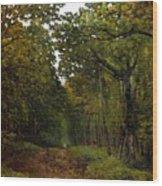 Avenue Of Chestnut Trees Wood Print