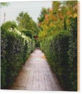 Avenue Of Dreams 2 Wood Print