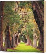 Avenue Of Oaks 2 I Am The Way Wood Print