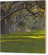 Avenue Of Oaks 2 St Simons Island Ga Wood Print