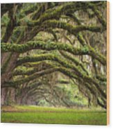 Avenue Of Oaks - Charleston Sc Plantation Live Oak Trees Forest Landscape Wood Print by Dave Allen