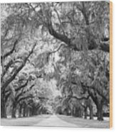 Avenue Of Oaks Charleston South Carolina Wood Print