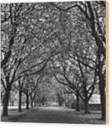 Avenue Of Trees Monochrome Wood Print