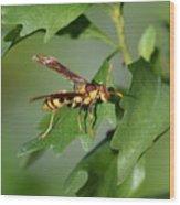 Avispa Wood Print
