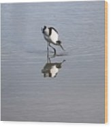 Avocet And Reflection Wood Print