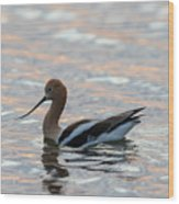 Avocet Sunset Wood Print