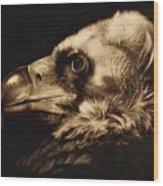 Avvoltoio Wood Print