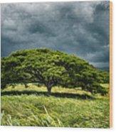 Awaiting The Rain Wood Print
